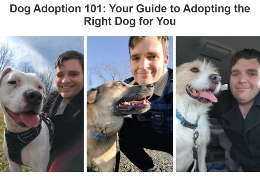 Dog Adoption 101: Your Guide to Adopting the Right Dog for You (Tri Pets article screenshot)